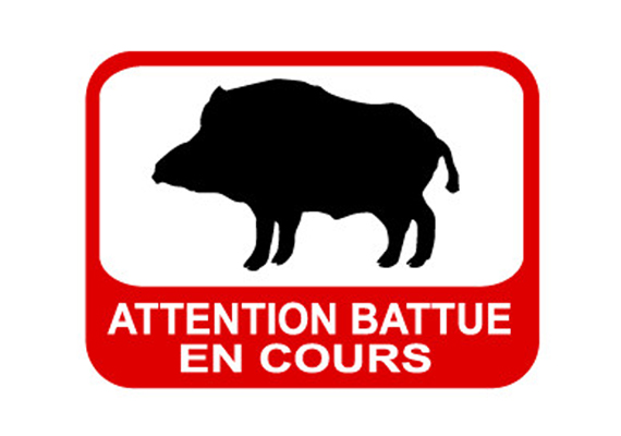 Battues régulant la population des sangliers